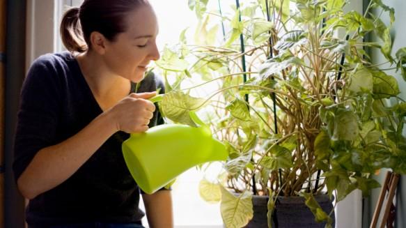 watering-plants-e1454341562368